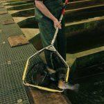 Pêche en bassins couverts