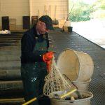 Pêche en bassins intérieurs à la Pisciculture Beaume