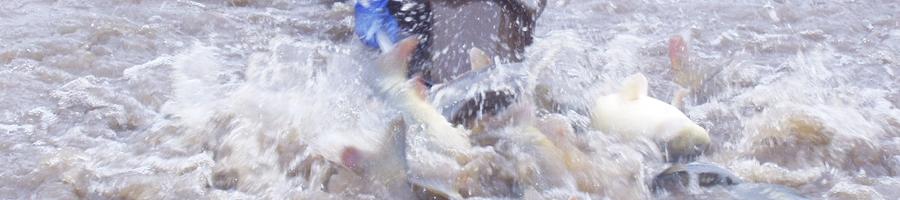 les poissons en bassins extérieurs de la pisciculture Beaume
