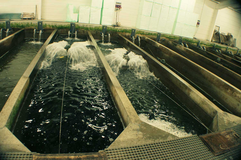 Les bassins de stockage de la Pisciculture Beaume