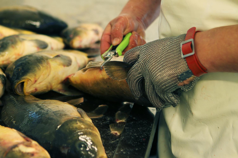 Ecaillage des carpes à la pisciculture Beaume