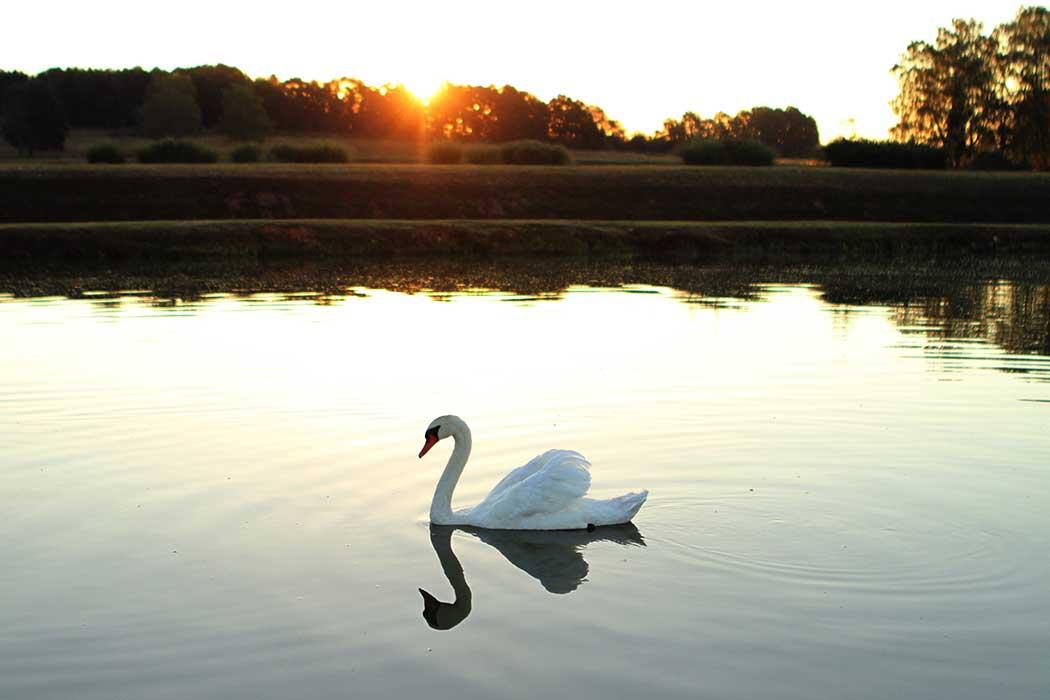 lever de soleil sur un étang