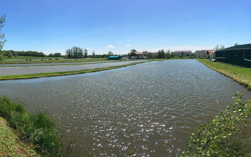 panoramique des étangs de la pisciculture en Franche-Comté